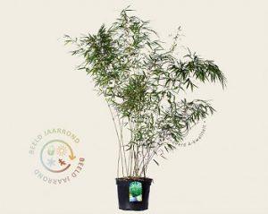 Tuinplantenwinkel