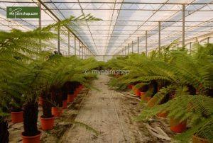 Wij wilden palmbomen kopen voor onze tuin